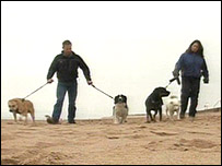 Sgt Farthing and his wife Lisa, with their newly extended family of dogs