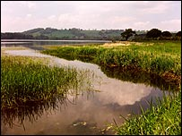 Reed beds at Chew Valley Lake: photo from Bristol Water