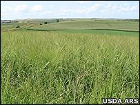 Switchgrass prairie (Image: USDA ARS)