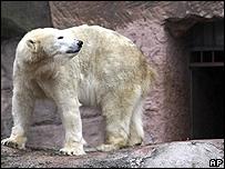 Vera en el Zoológico de Nuremberg