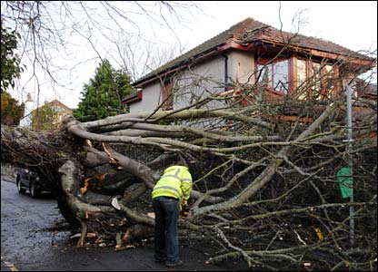 Tree felled in Dundee