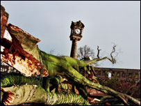 Fallen Tree (picture courtesy of John Summers)