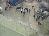 Horses at site