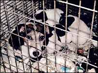 Johanna Price crammed 59 dogs into her home