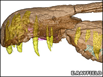 CT scan of Baryonyx skull (E.Rayfield)