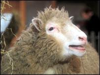 Клонированная овечка Долли