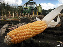 Corn being harvested in Germany - file photo