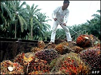 A labourer at a palm plantation in Indonesia - file photo