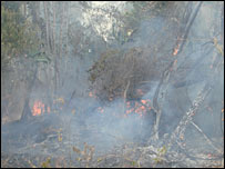 A fire destroys forest on John Carter's land