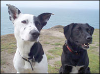 Two dogs. Image: BBC