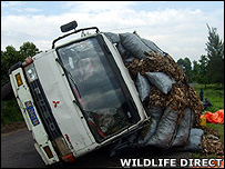 Overturned charcoal truck (Image: WildlifeDirect)