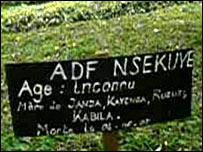 Gorilla graves