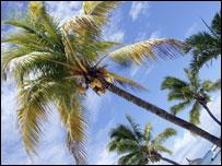 Beach and palm trees, BBC