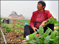 A villager cuts spinach in Kunyao