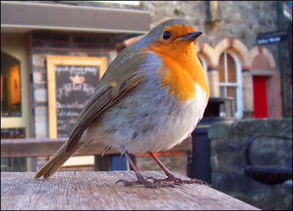 Vincent Whittingham from Llandudno took this picture of a robin on a day out in Betws-y-Coed.