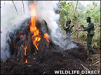 Charcoal burning in DR Congo (WildlifeDirect)