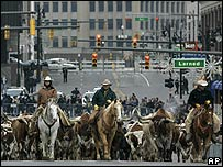 Chrysler's cowboys drive a herd of cattle through Detroit