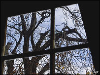 Anne Frank's horse chestnut tree in Amsterdam