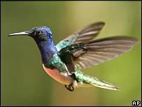 Hummingbird. Image: AP