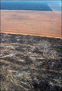 Deforestación en Mato Grosso, Brasil, foto Greenpeace