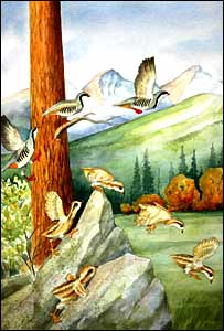Bird flight illustration (Robert Petty)
