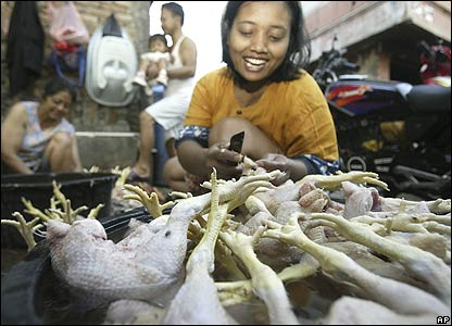 Chickens in Jakarta, Indonesia