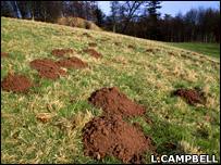 Molehills (L.Campbell)