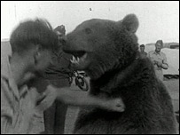 Bear Scottish WWII