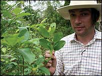 Alex James watches as the coca leaves are harvested