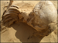 Skull found at Amarna (BBC)