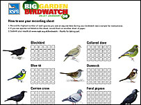RSPB birdwatch record sheet