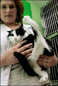 Baby Girl with her extra paw, held by Linda Hughes of the Washington Area Humane Society