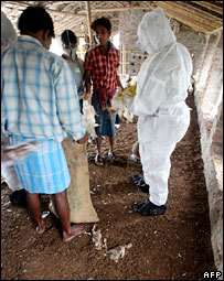 Culling of infected poultry in West Bengal village