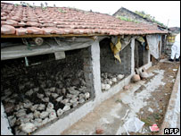 An affected poultry in West Bengal