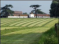 Cut grass in a meadow (Image: BBC)