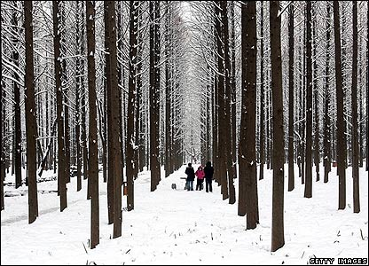 Residents walk in a wood, Nanjing, 26 Jan 2008