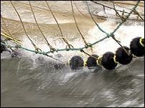 Trawl net in water (Image: TVE)