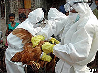Chicken culling operation in West Bengal