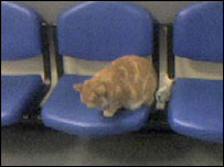 A mobile phone picture of the ginger cat sitting in a waiting area at Bronglais Hospital