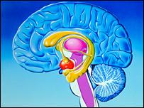 Sistema límbico cerebral