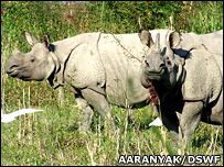 Indian one-horned rhino Aaranyak/DSWF