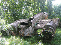 Rusted Japanese bomber in the middle of a jungle (Photo: Nick Squires)