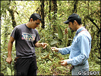 Research team in Costa Rica (G.Gigot)