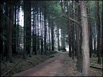 Kinneil Woods