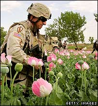 US soldier inspects poppy fields in Helmand province (2007)