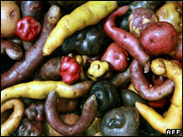 Potato varieties in Peru