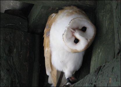 Owl twisting its head