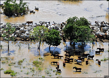 Livestock near Trinidad, 9 February 2008