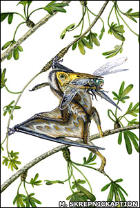 Nemicolopterus crypticus.  Image: Michael Skrepnickaption