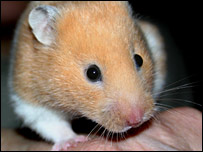 Hamster (file photo)